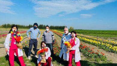 """Photo of I tulipani della"""" Cascina Savino"""" arrivano nell'ospedale """" Teresa Masselli Mascia """"di San Severo"""